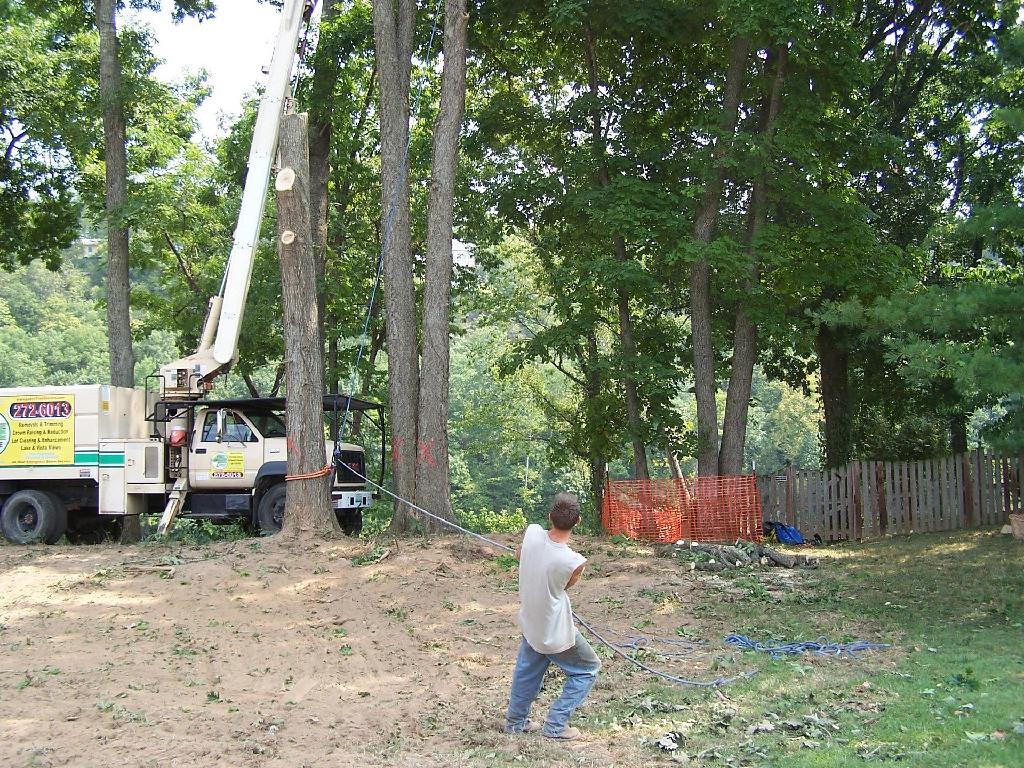 lakes tree service