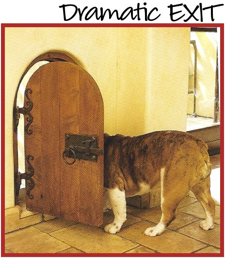 Attention Dog Lovers Great Ideas For Dog Doors After All They Are