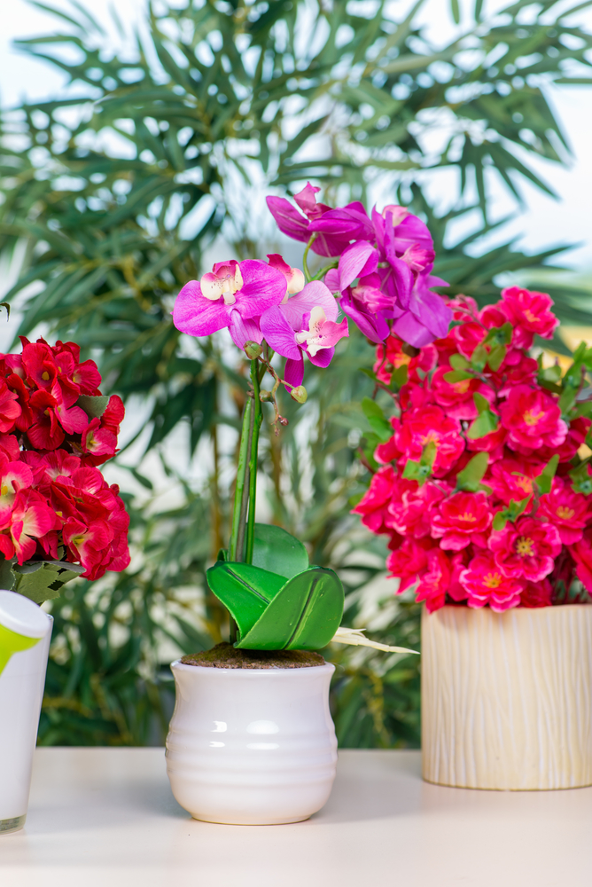 Guide to growing 3 popular tropical plants indoors south maui kihei tropical plants mightylinksfo