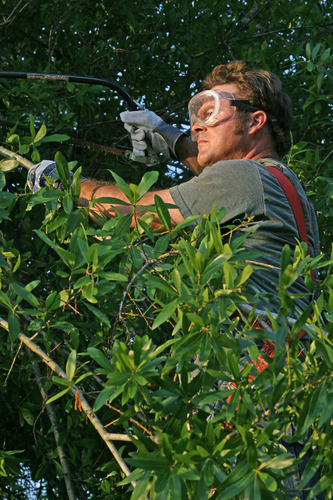 Landscaping Bark Kalispell : You should do tree thinning l m service kalispell nearsay