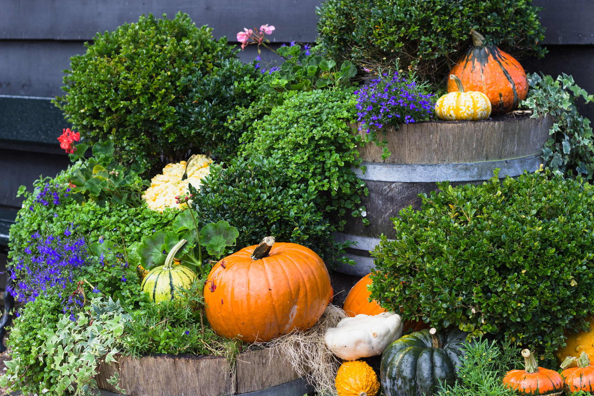 3 Fall Landscape Tips From Professional Landscaping
