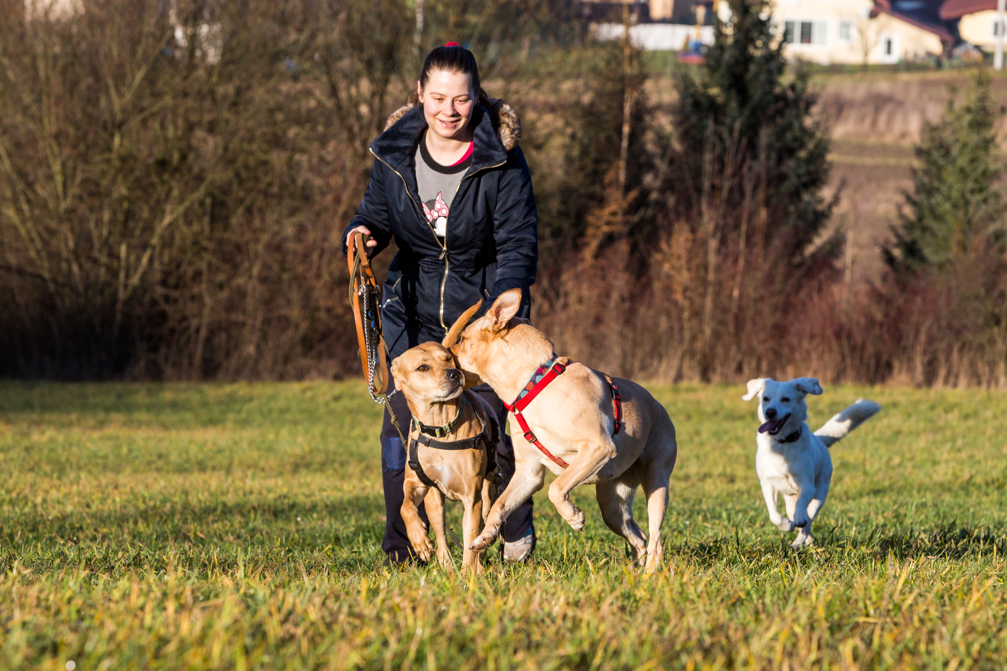4 Ways to Find a Responsible Dog Breeder - Hilton Veterinary