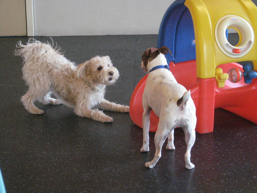 Trust dogtopia of omaha winner of best dog daycare pet boarding or getting your dog squeaky clean yourself with dogtopias self serve dog wash the professional highly trained staff will provide you and your dog solutioingenieria Choice Image