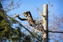 Macon-GA-emergency-tree-removal