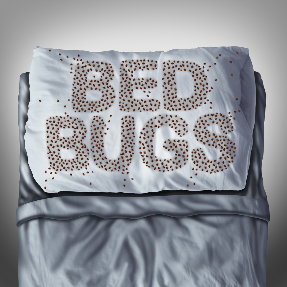 Pest control 5 things you should know about bed bugs for Dry cleaning kill bed bugs
