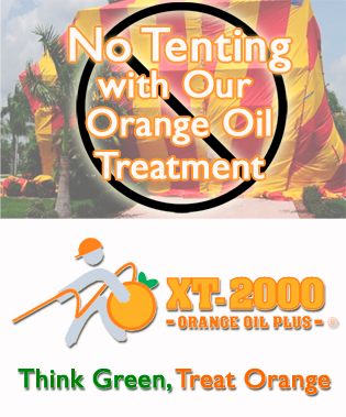 Safe natural termite control treatments on maui the big island wood absorbs the orange oil solution just as easily as a wick naturally absorbs water because xt 2000 orange oil plus travels through porous wood in all solutioingenieria Image collections