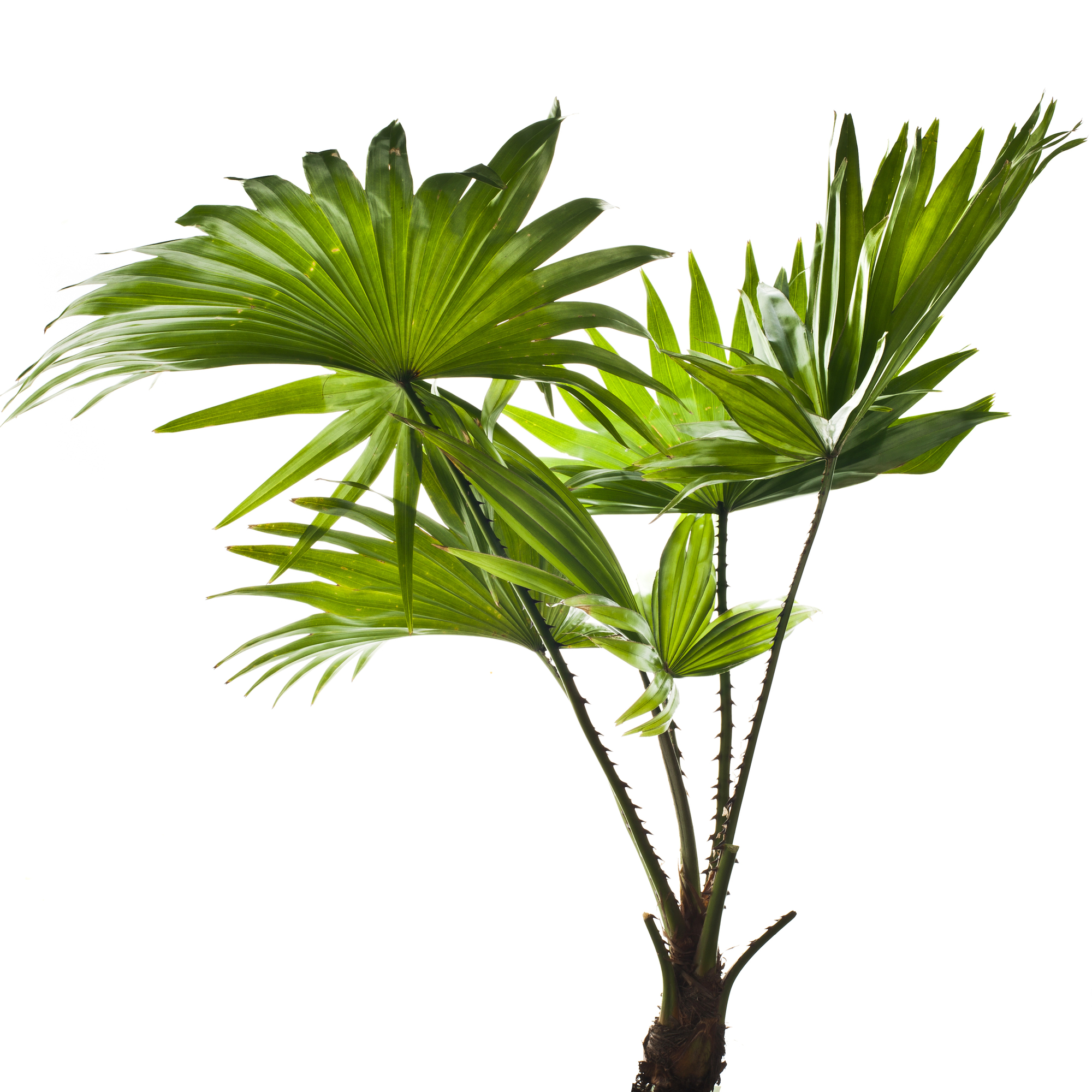 Plants To Choose From Its Important To Consider Your Recipients Living Space And Gardening Experience Before You Select A Plant Palm Trees Take Up A