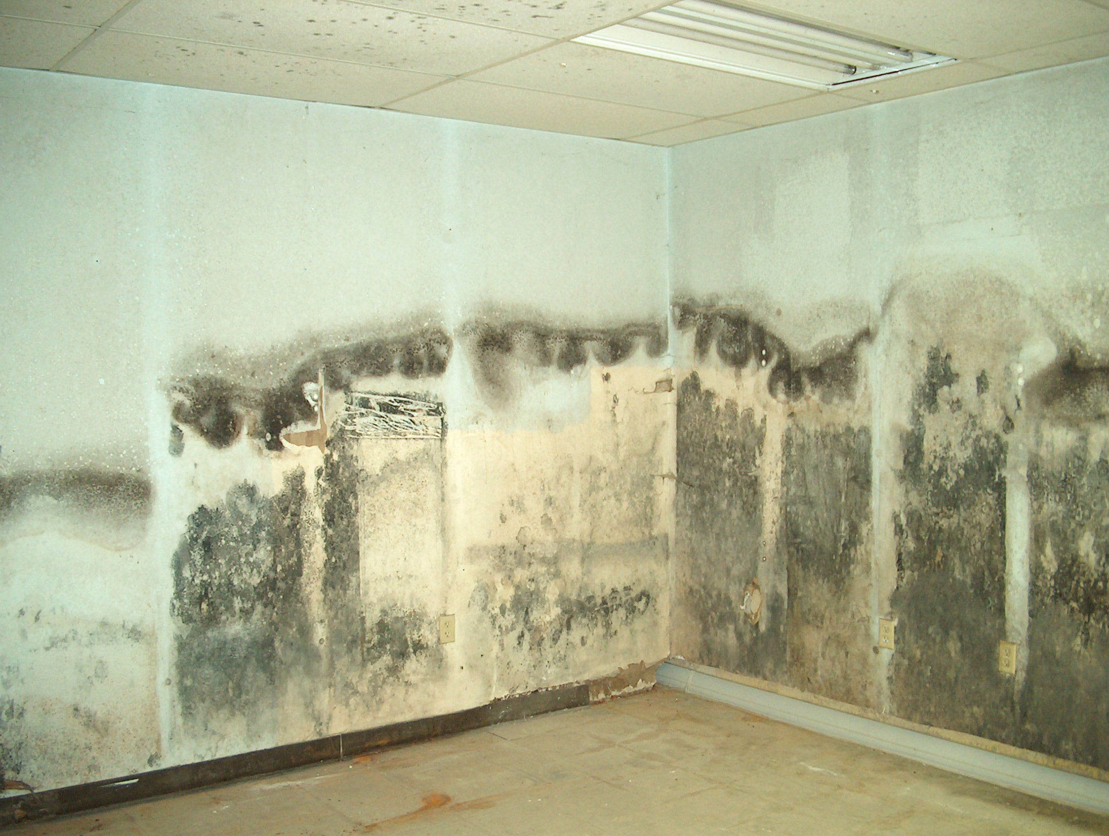 the water restoration experts at servpro answer the question how long does it take mold to form. Black Bedroom Furniture Sets. Home Design Ideas