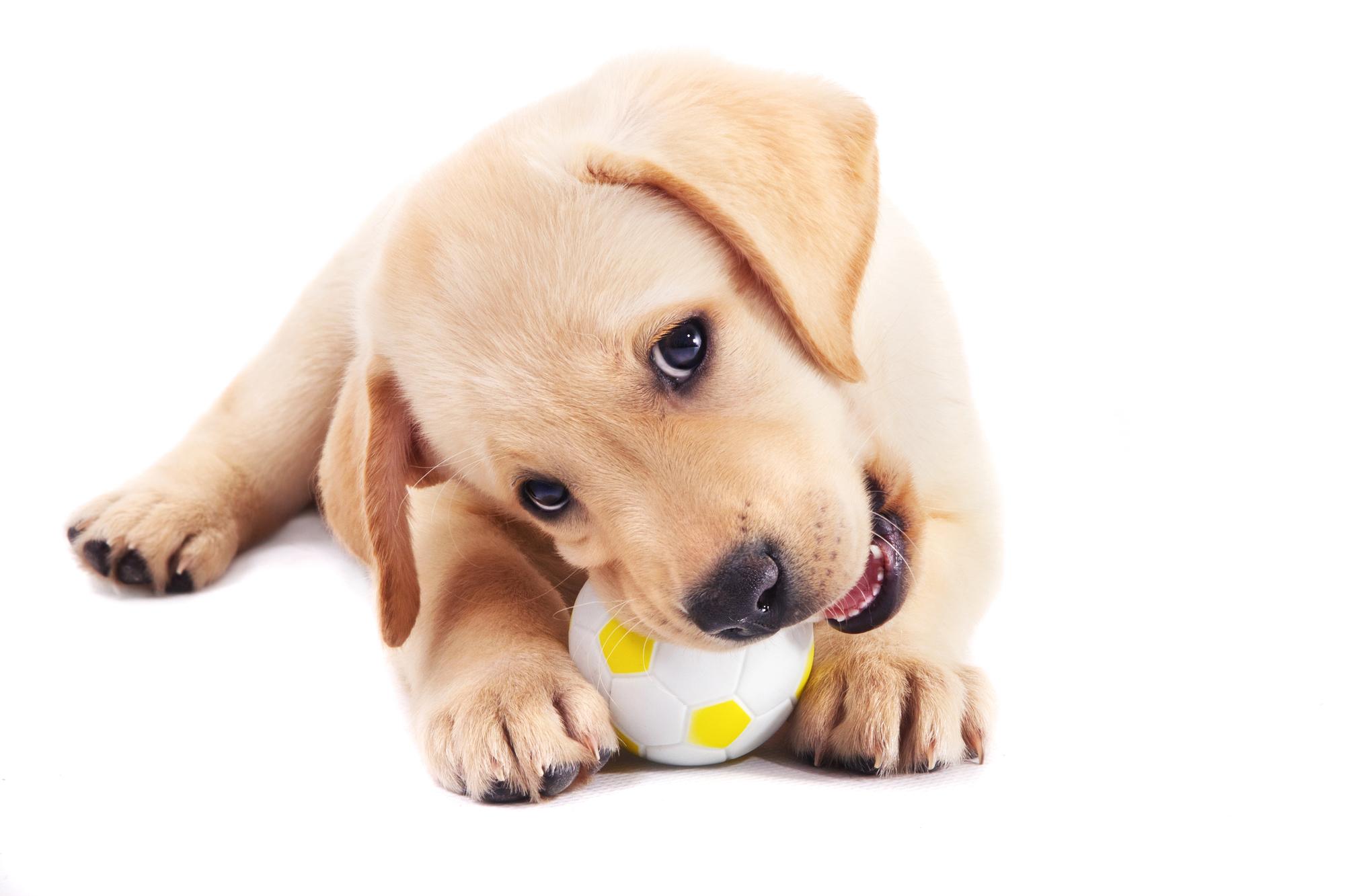 Good Gift For Dog Groomer