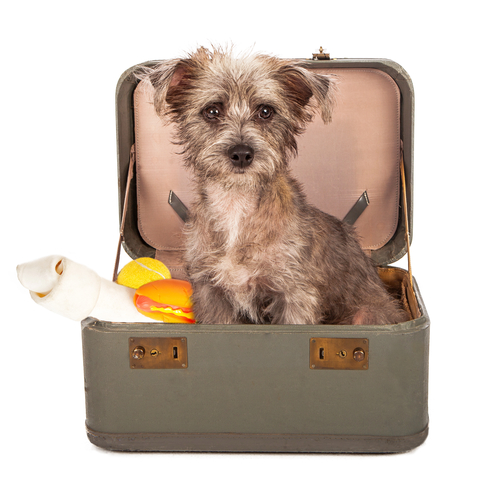 A veterinarian shares 3 prep tips for pet boarding for Ready dog kennel