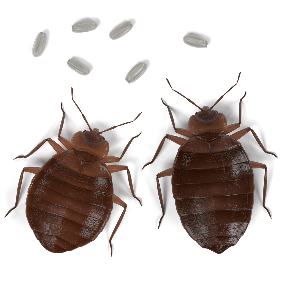 Can Bed Bugs Get Into Cardboard Boxes