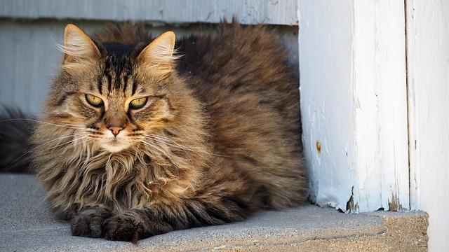 Best Cat Food For Geriatric Cats