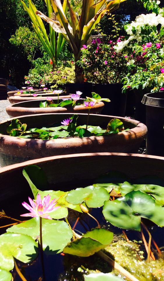 3 Things Hawaiians Can Do With Their Gardens This August