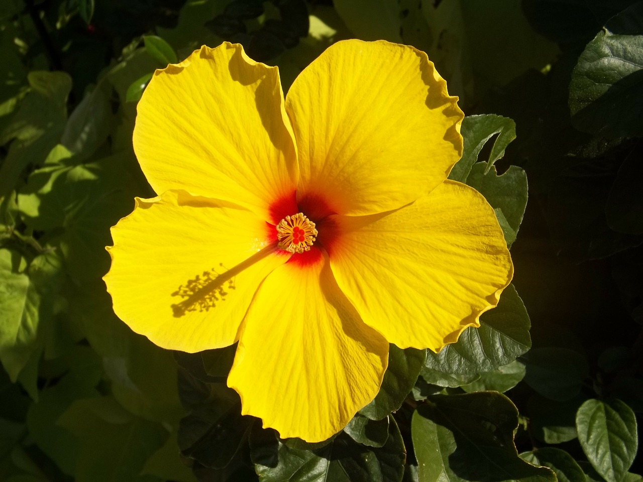Find Native Hawaiian Flowers And Trees At Akamai Landscape