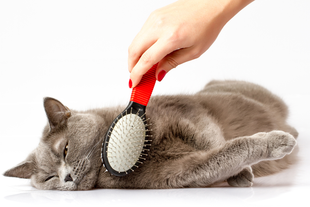 How To Use A Pet Grooming Table For Cats