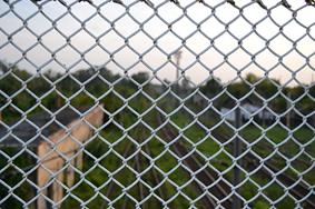 custom metal fencing