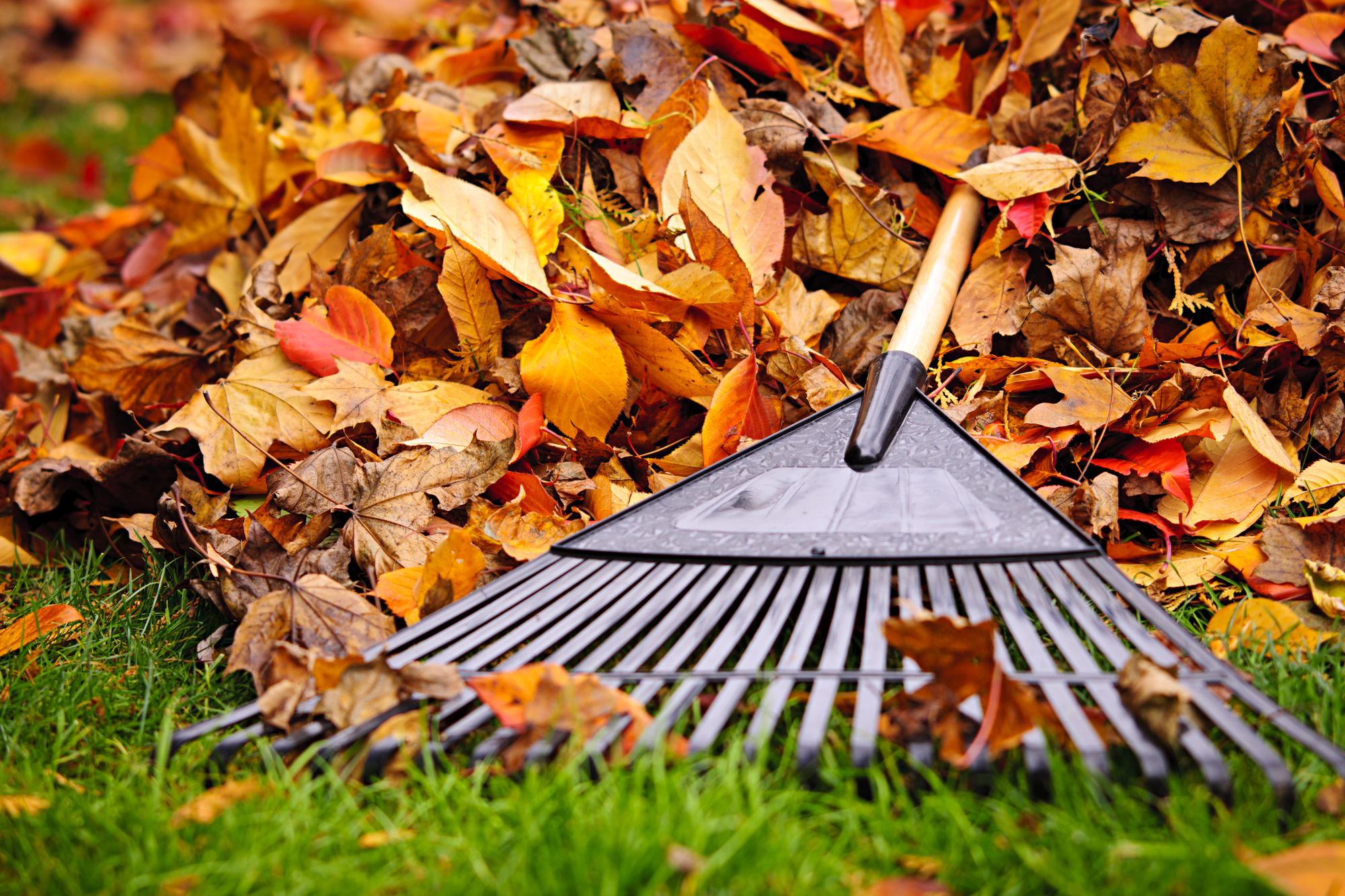 Fall Landscaping Fall Landscaping Faqs Answered Greenturf Lawnscapes Loveland