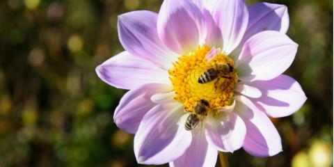 New-York-bee-control