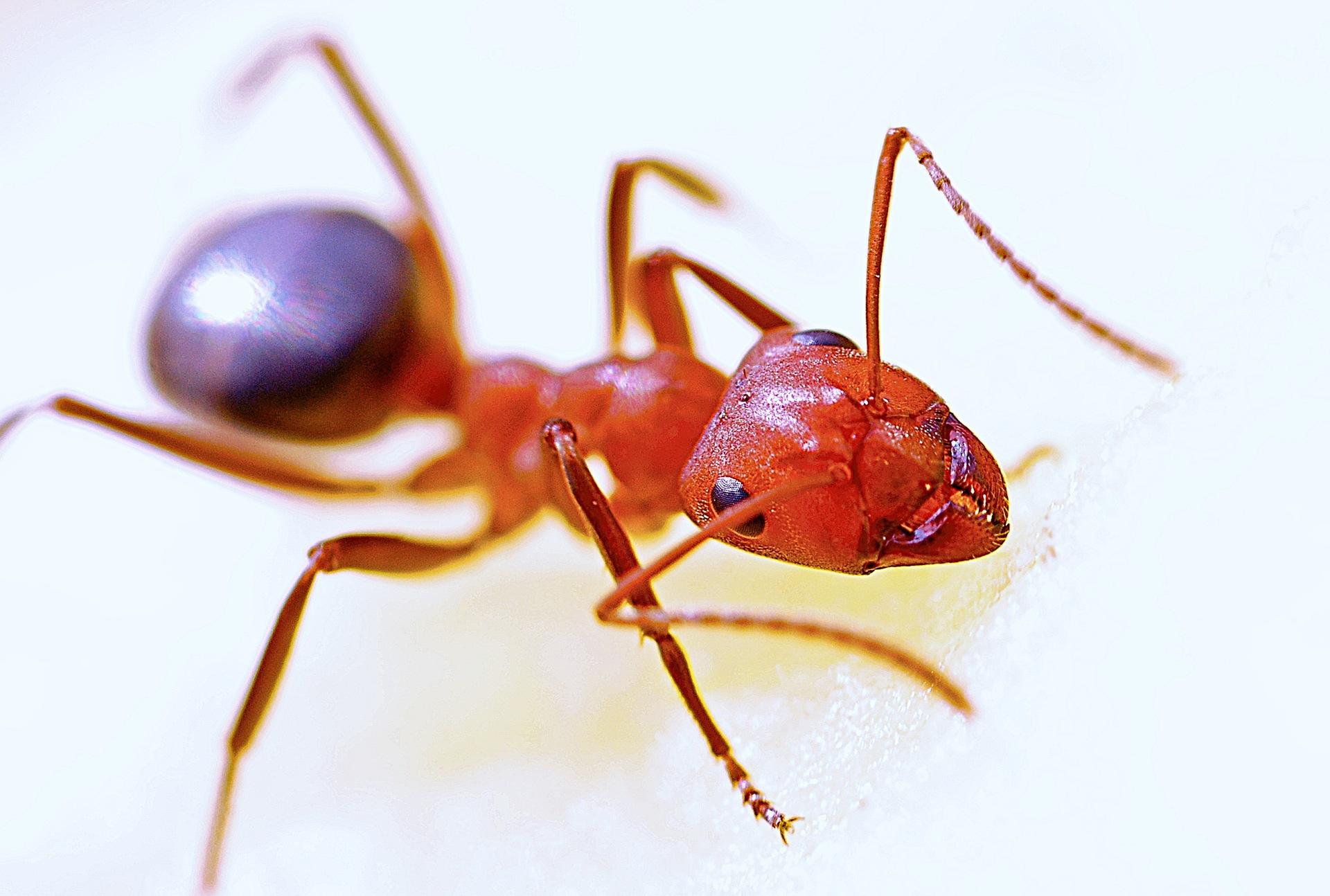 pest-control-exterminator-Wahiawa-HI