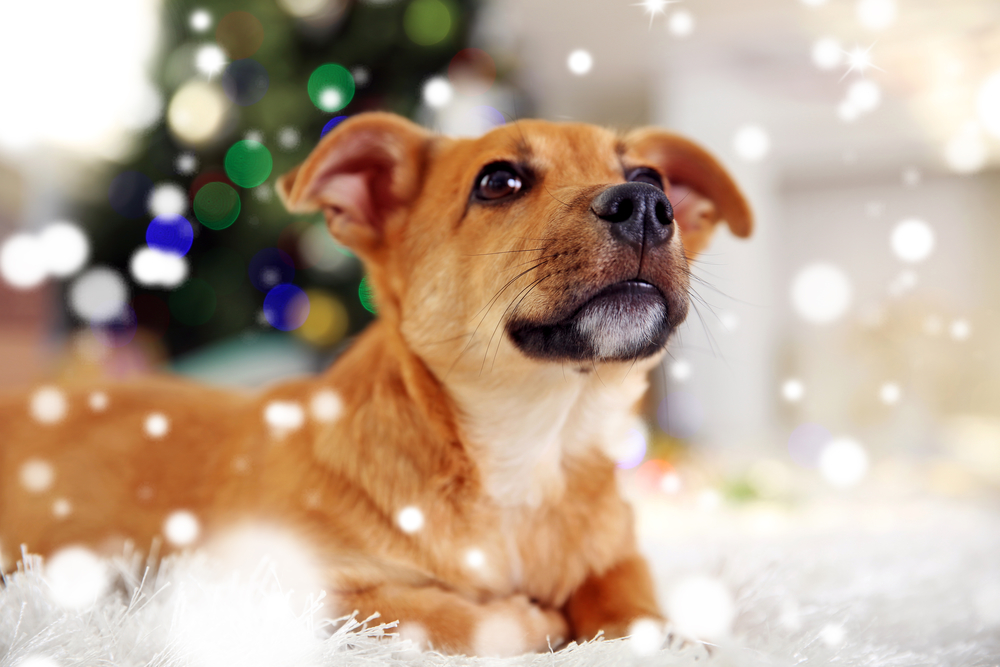 Christmas Puppy Pet Care Checklist Responsibility Awaits