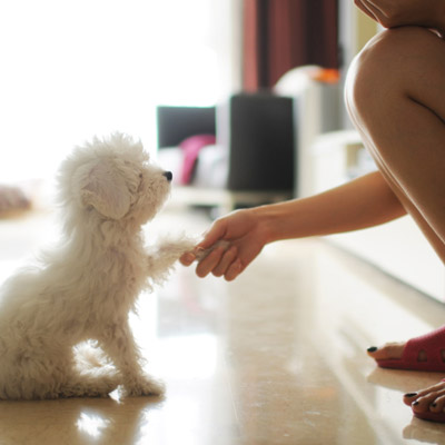 How to make your home pet friendly advice from your local vet waipio pet clinic ewa nearsay - Make house pet friendly ...