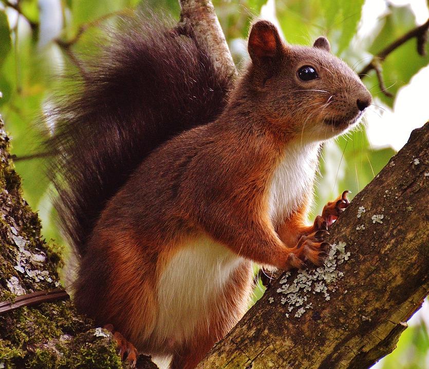 squirrel-removal-cincinnati-oh