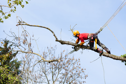 St.-Louis-MO-tree-removal