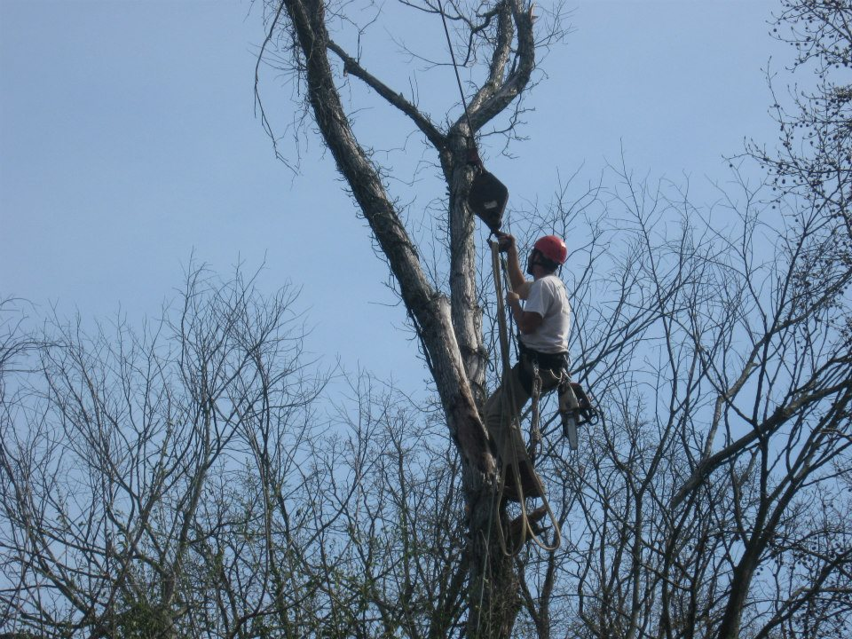 tree-trimming-dexter-ky