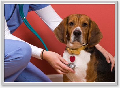 Low cost pet vaccines renton wa sierra fish pets for Sierra fish and pets
