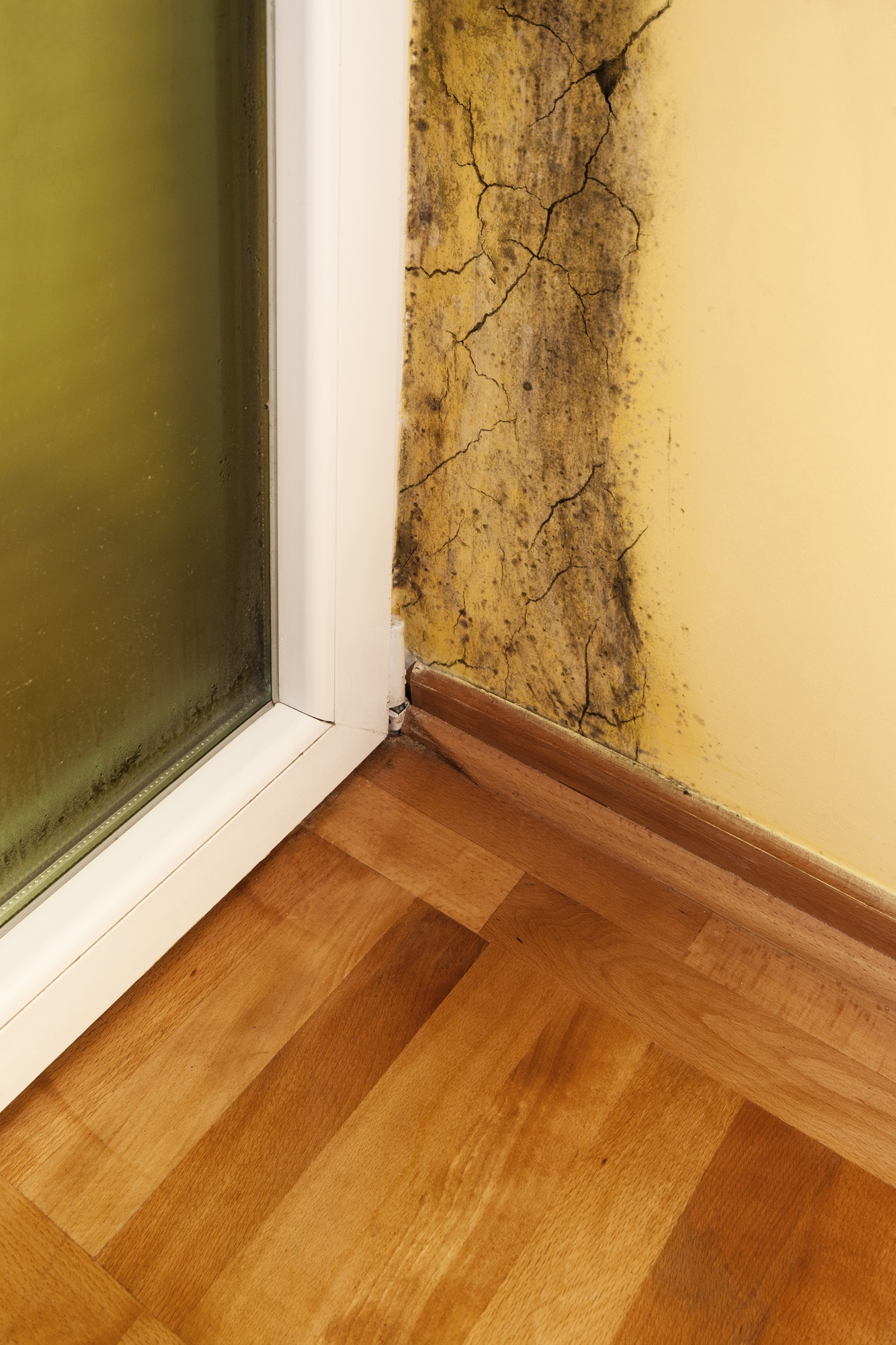 Mold Specialist Doctor